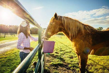 carattera cavallo