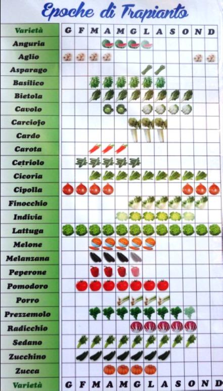 trapianto-orto-semina