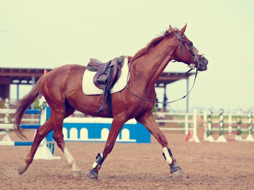 cavallo come sceglierlo