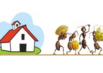 formiche-casa