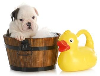 Come lavare il cane Consigli per lavare il cane | Guide online