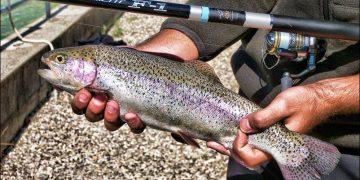 Pescare trote