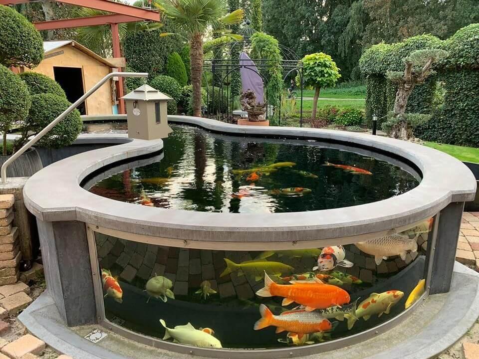 acquario Koi pond