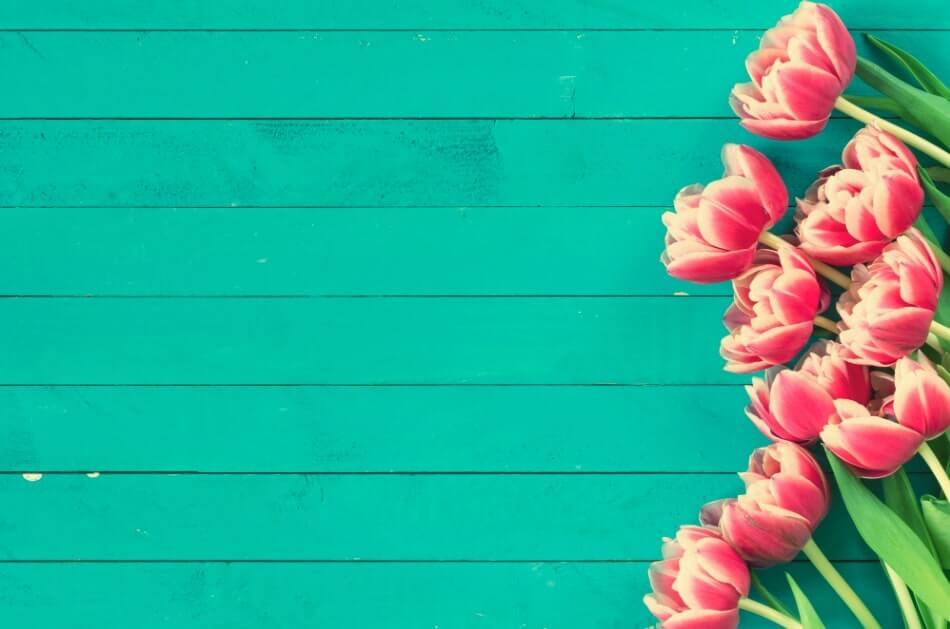 quando si piantano i bulbi di tulipani olandesi