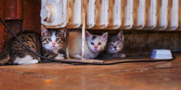 catturare gatti selvatici