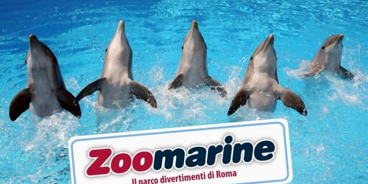 come arrivare a zoomarine