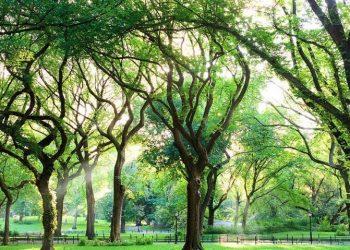 foresta di olmo