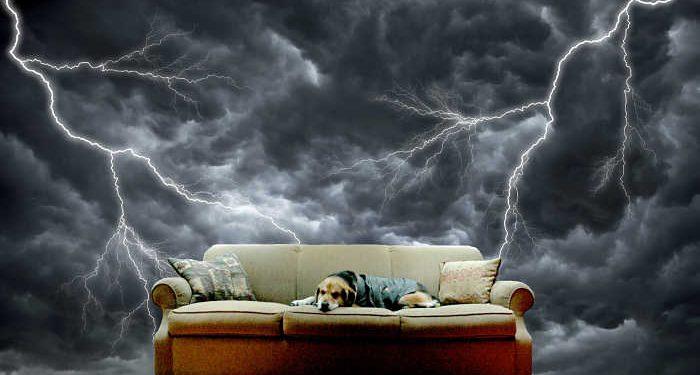 cane sul divano impaurito