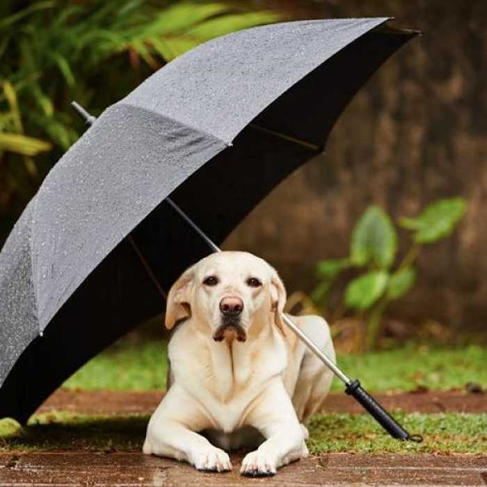 cane al riparo pioggia