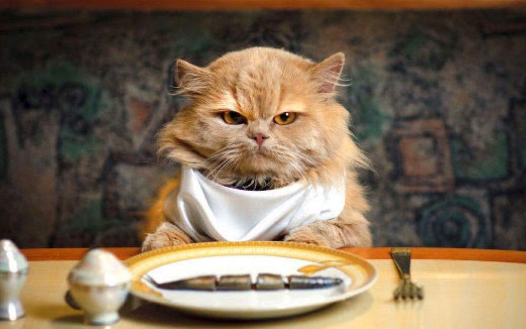 cosa non deve mangiare un gatto