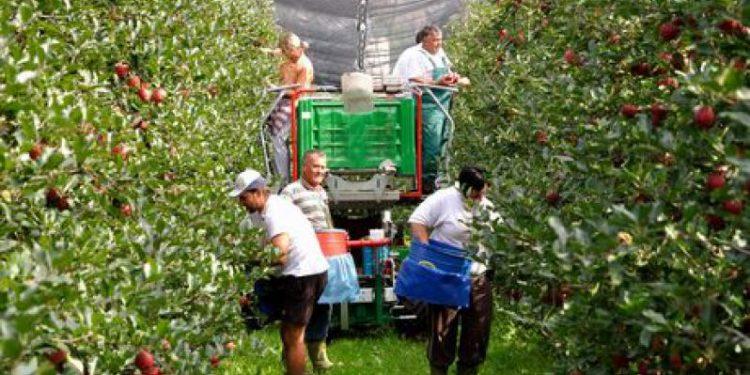 disoccupazione-agricola-requisiti