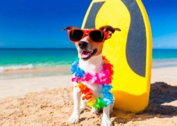 spiagge cani Chiavari