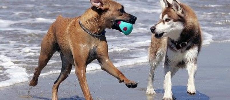 Le spiagge dog friendly in Liguria