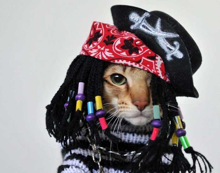 gatto vestito da pirata