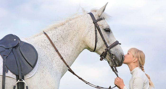 come scegliere un cavallo