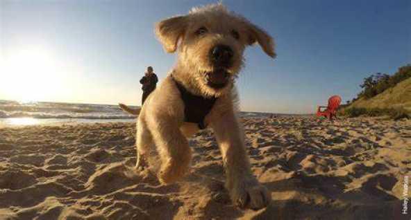 cucciolo in spiaggia