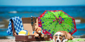 pitbull in spiaggia